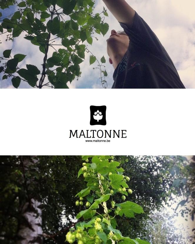 montage - Maltonne